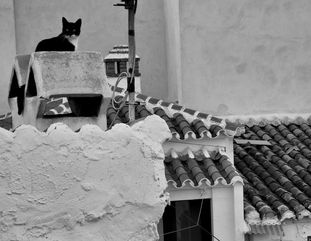 Comares Axarquia Spain Cat