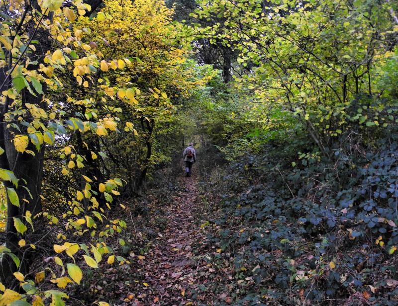 Ludlow Shropshire UK Tinkers Hill