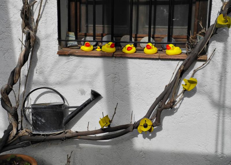 Axarquia Spain Ducks