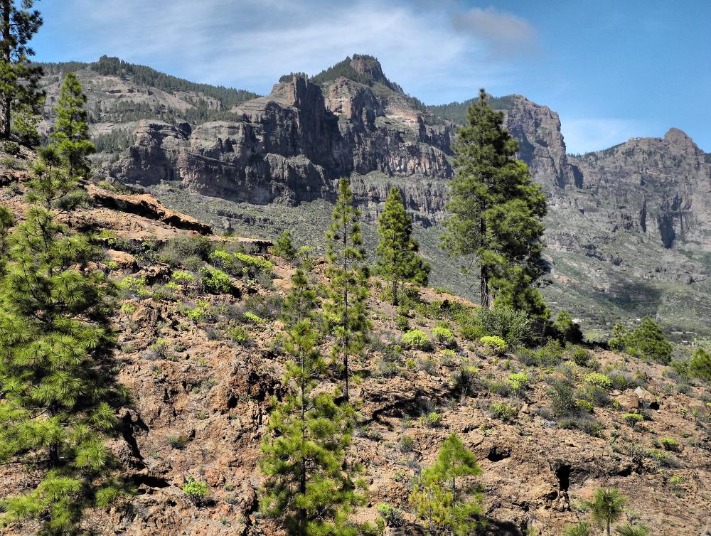 Gran Canaria Spain Tunte