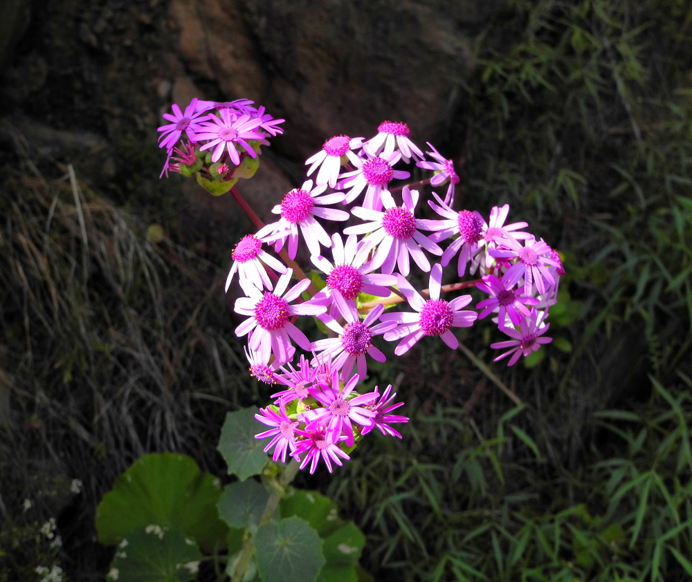 Gran Canaria Spain Soria Flower