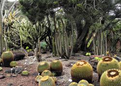Gran Canaria Spain Las Palmas Botanical Garden