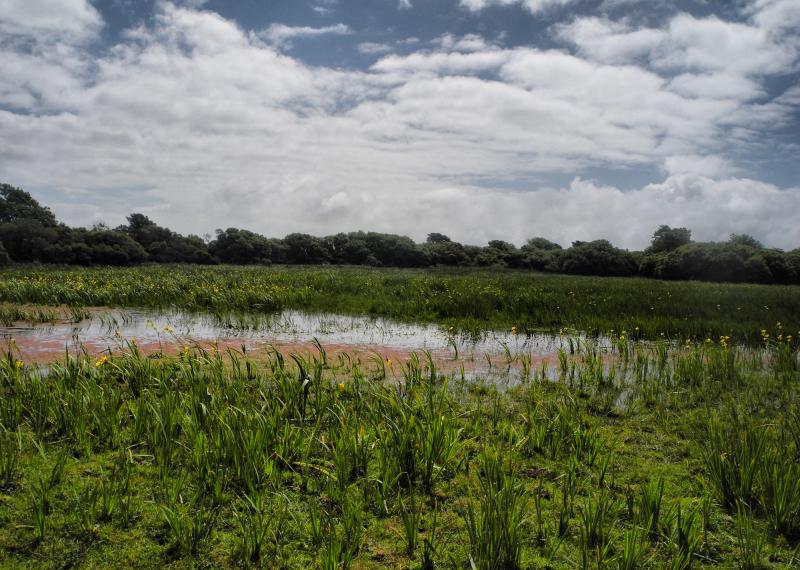 Tenby Wales UK Wetland