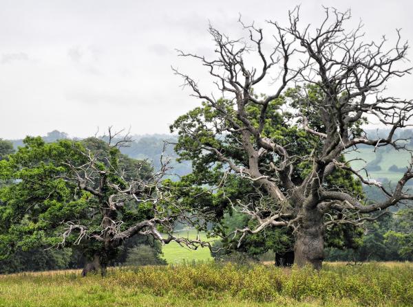 Derbyshire UK Oaker