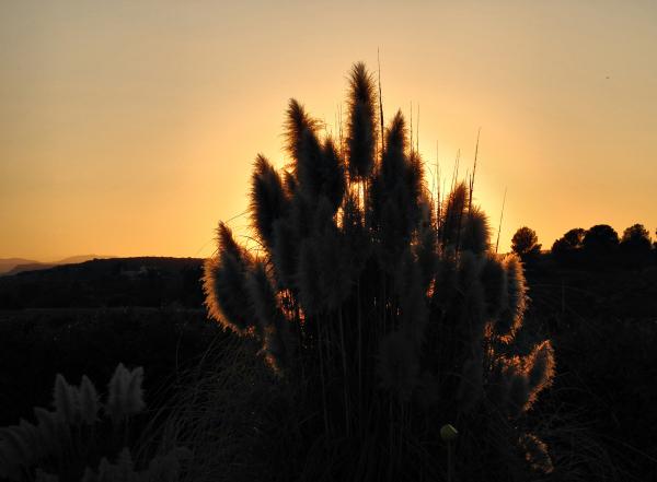 Almeria Grass Spain