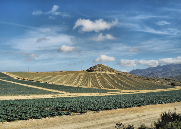 Almeria Cabbage Patch Spain