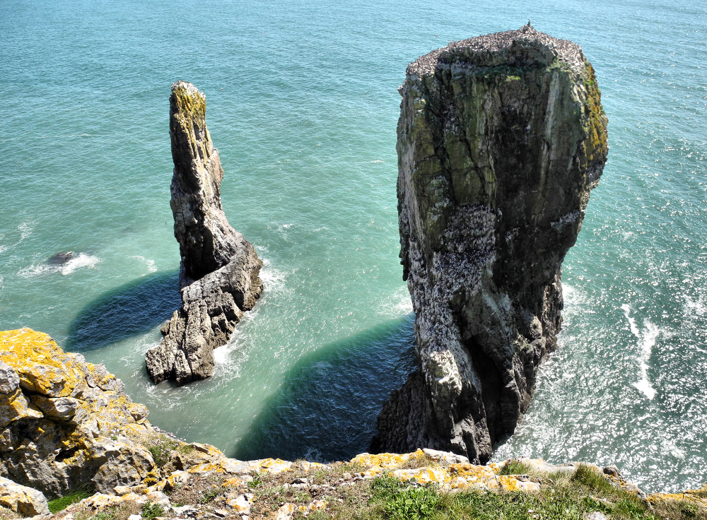Pembrokeshire Wales UK Elegug Stacks
