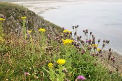 Pembrokeshire Wales UK Penally South Beach