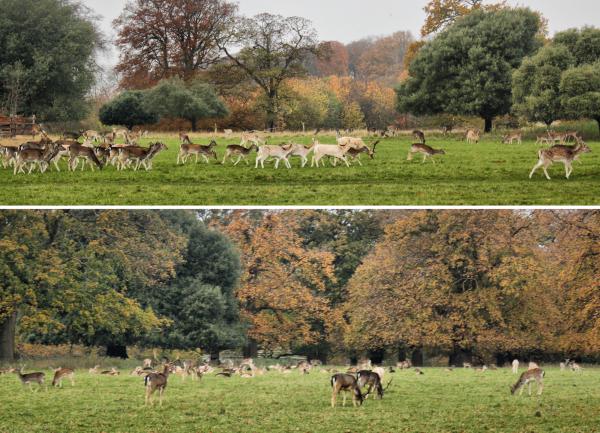 Norfolk Burnham Overy UK