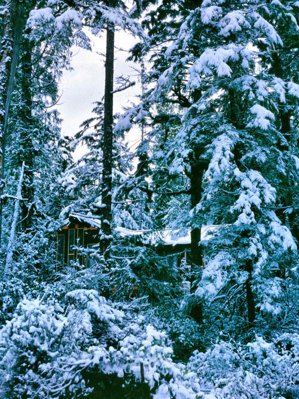 Tofino Vancouver Island BC Canada
