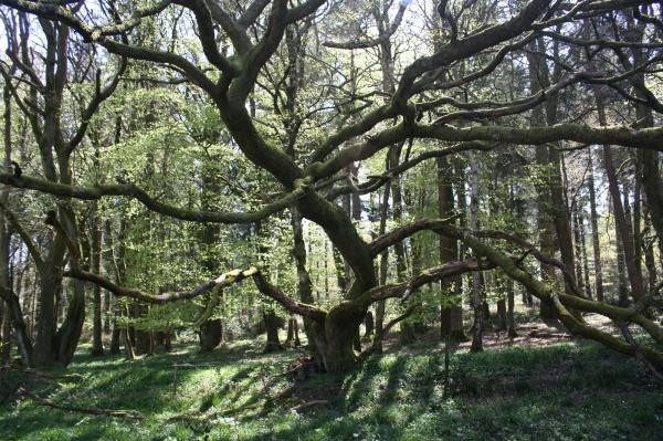 Herefordshire UK Bircher Common