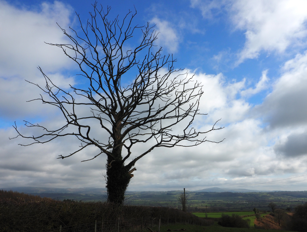 Diddlebury Shropshire UK