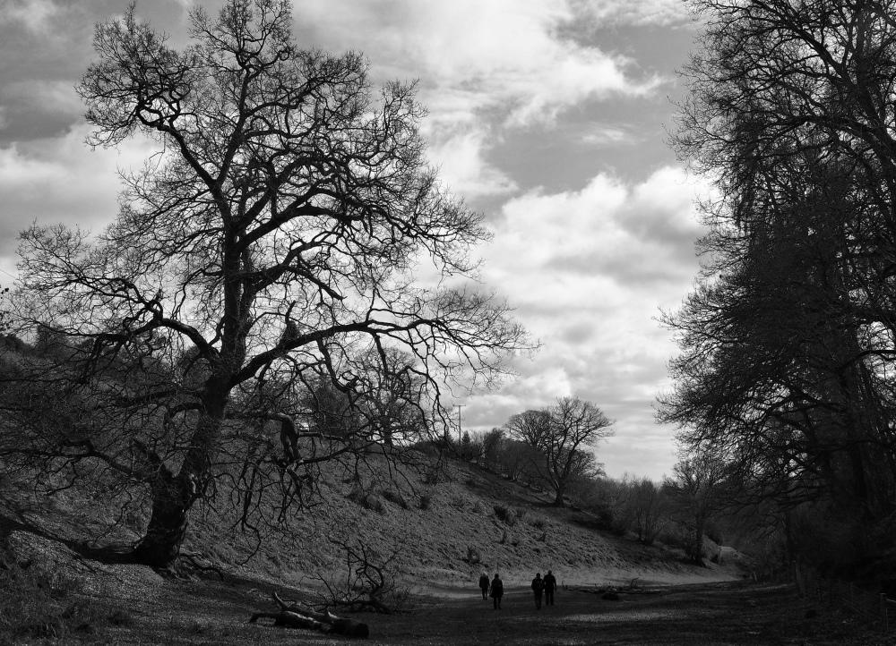 Ludlow Shropshire UK Trees
