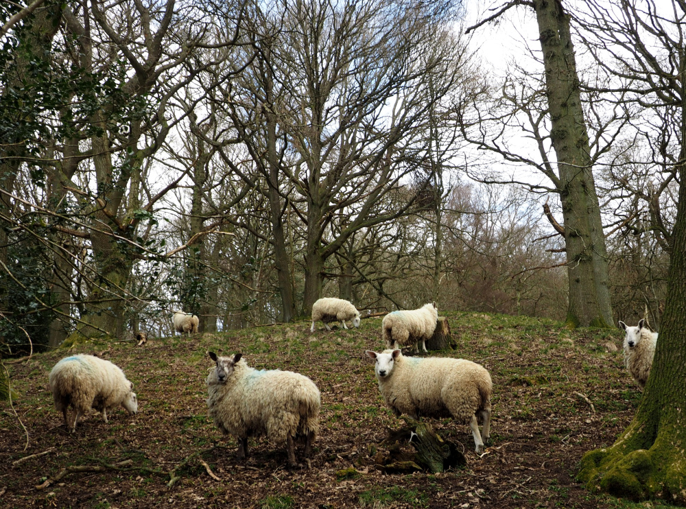 Shropshire UK Stokesay