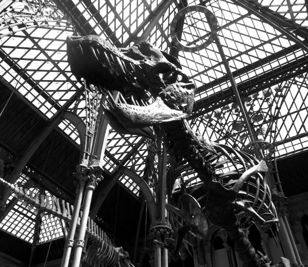 Oxford UK Natural History Museum