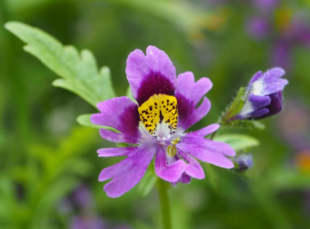 Ludlow Shropshire UK Flowers
