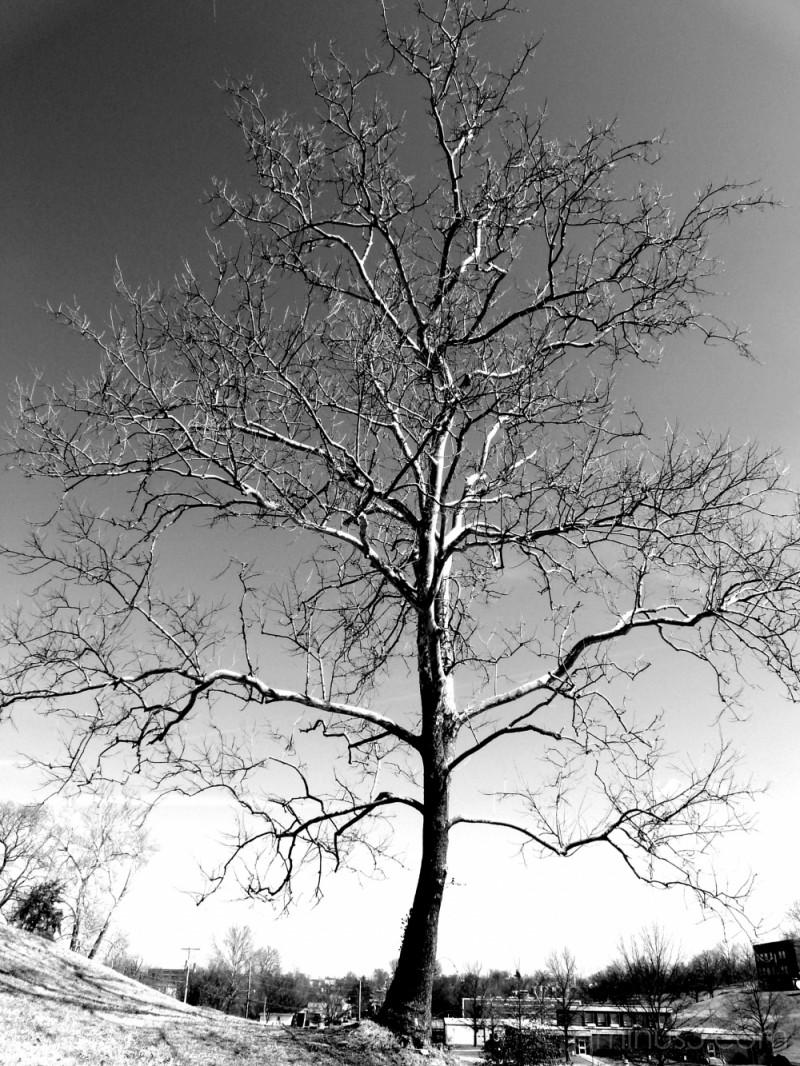 LU Tree