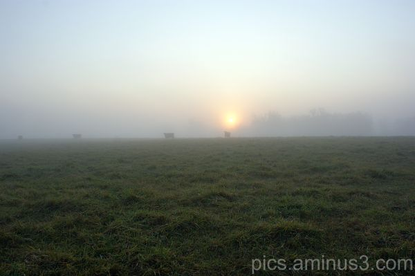 Foggy Morning Field