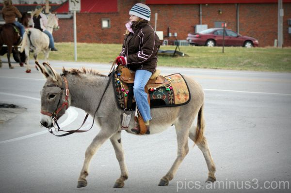 My Little Donkey