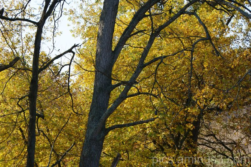 Fall Series 2008