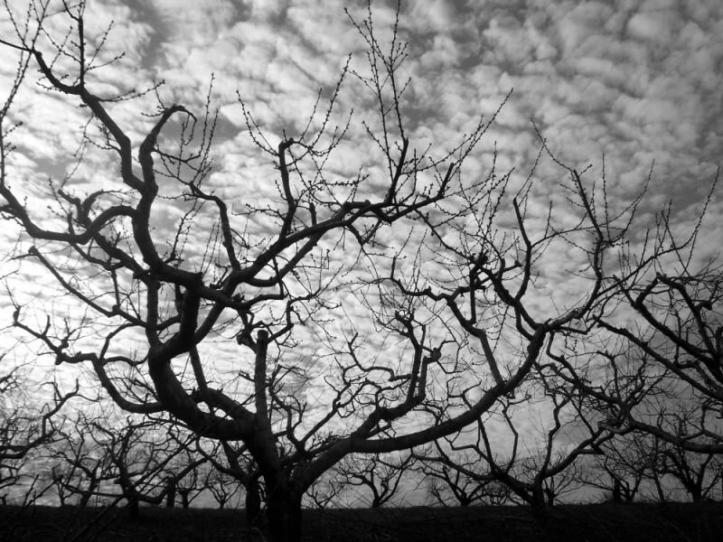 tree in lancaster
