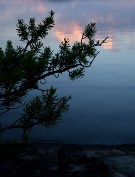 tree, at sunset