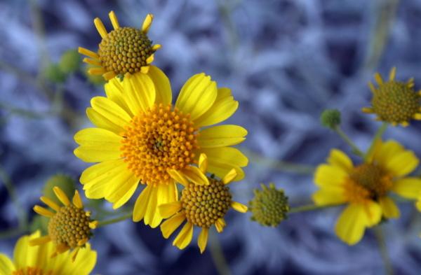 AZ Adventure Series - Flowers