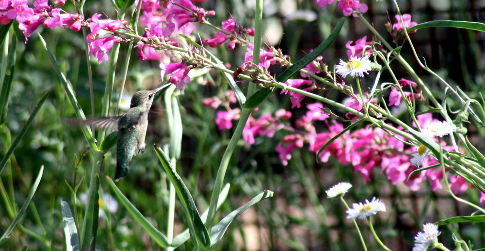 AZ Adventure Series - Hummingbirds