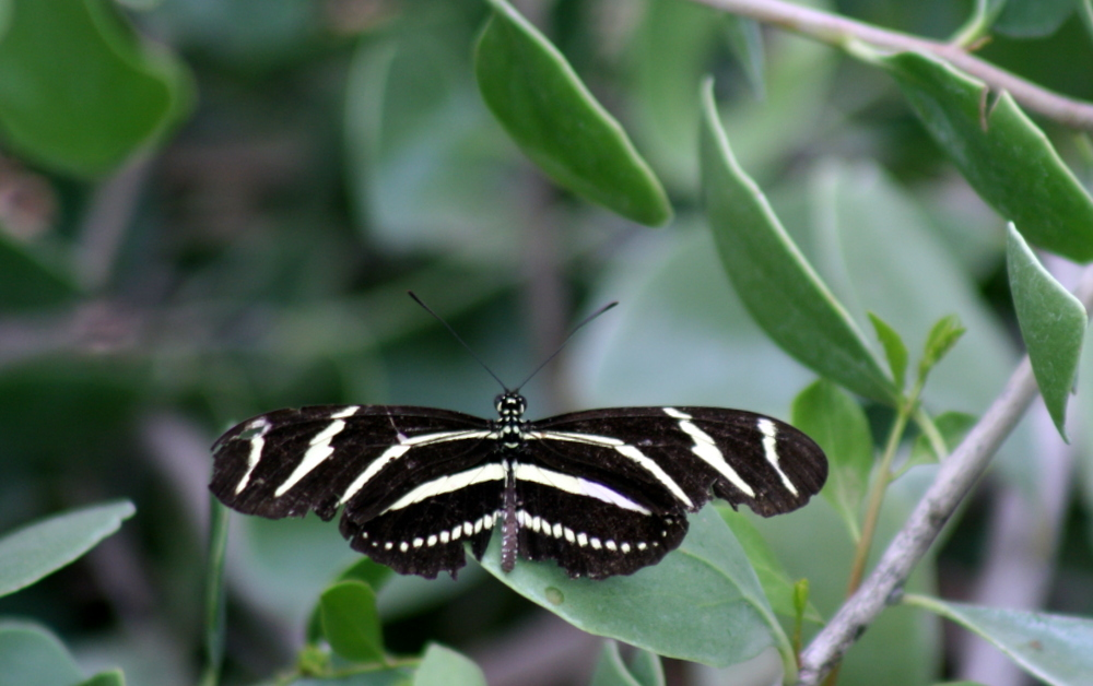 AZ Adventure Series - Butterflies