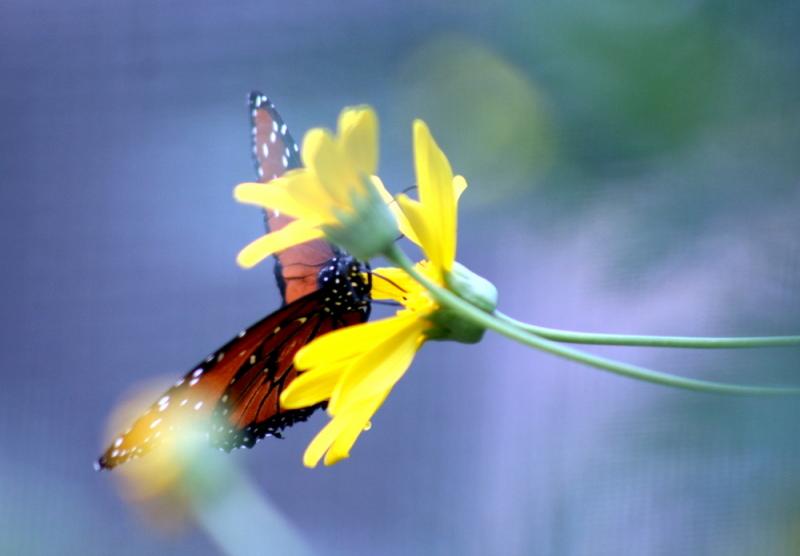 AZ Adventure Series - Butterflies