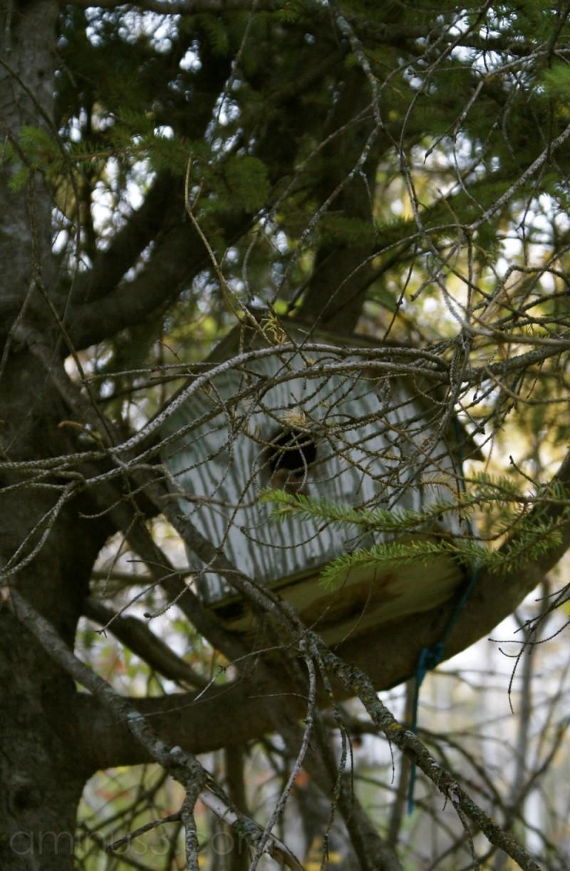 Birdhouse in Bird's Hill Park