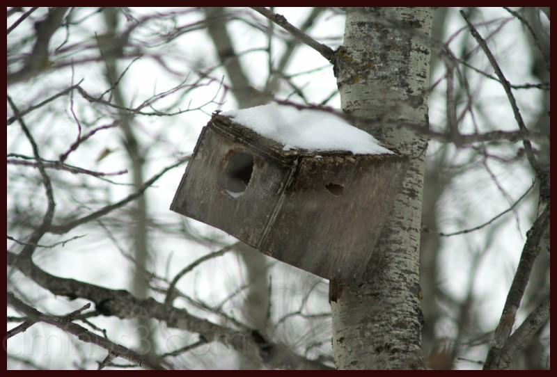 Random Birdhouse