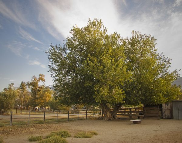 Lone Pine Corral