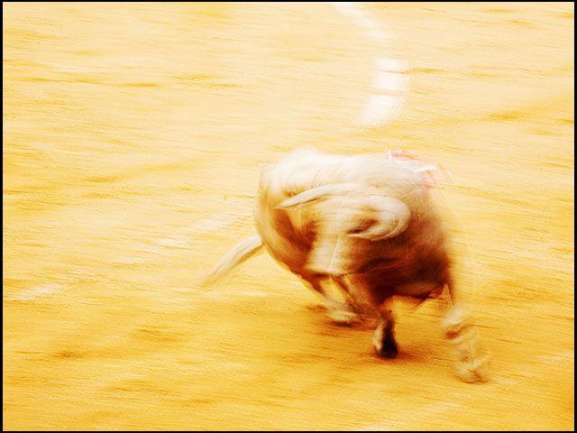 blurry bull