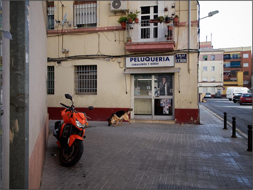 Perros valencianos (I)