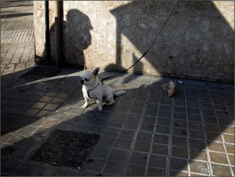 Perros valencianos (II)