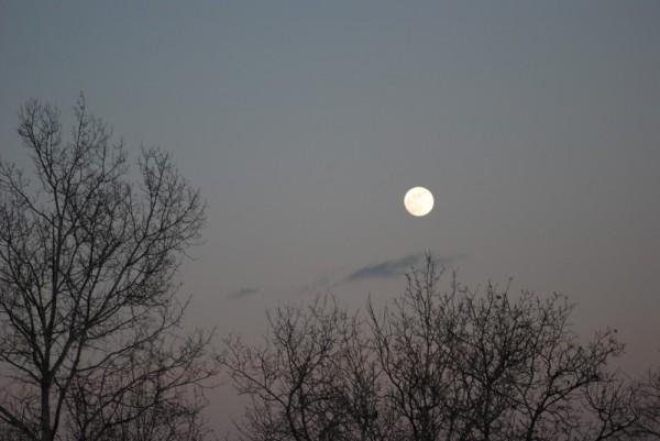 Full Moon Fever II