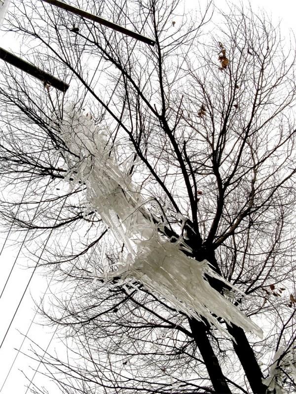 a freezed tree