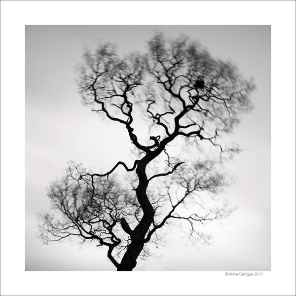 Lone Oak Tree, Study 6