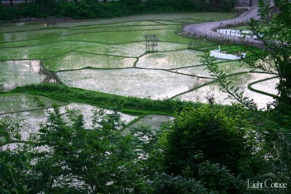 Rice Lands
