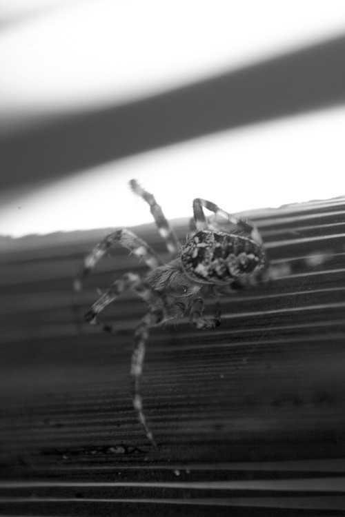 Incey Wincey