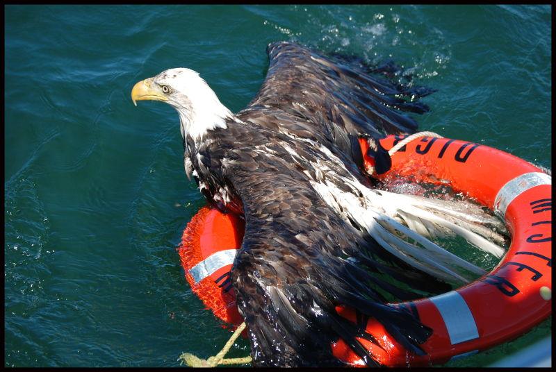 Rescue: The Amateur Attempt