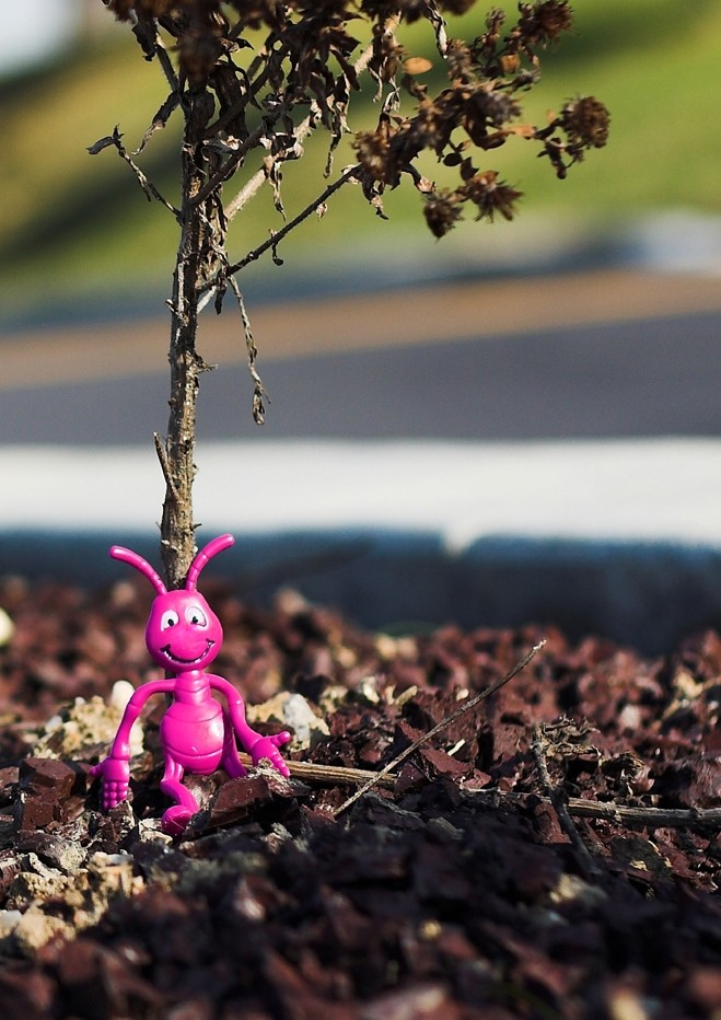 toy sitting on ground by tree