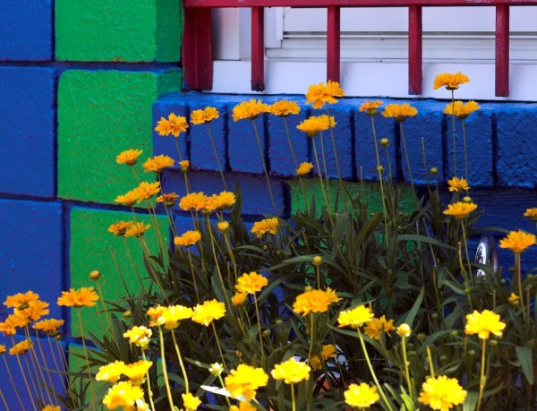 blue window box yellow flowers