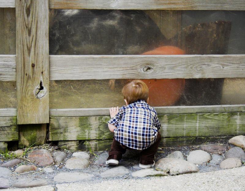 Toddler peeking through fence