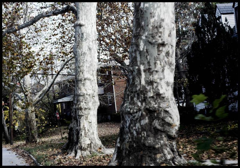 trees, bark