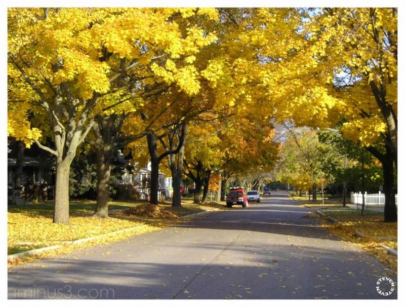 Gillett Street in Fall