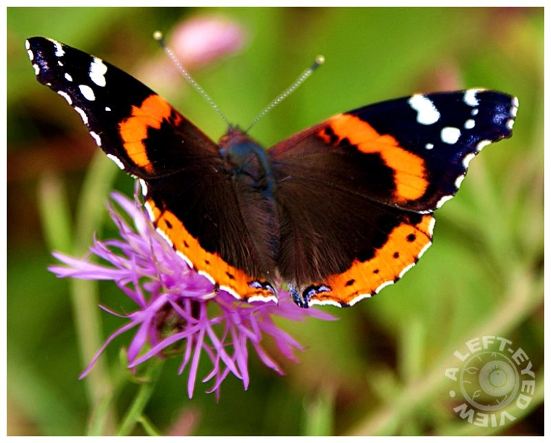 Flexing Wings