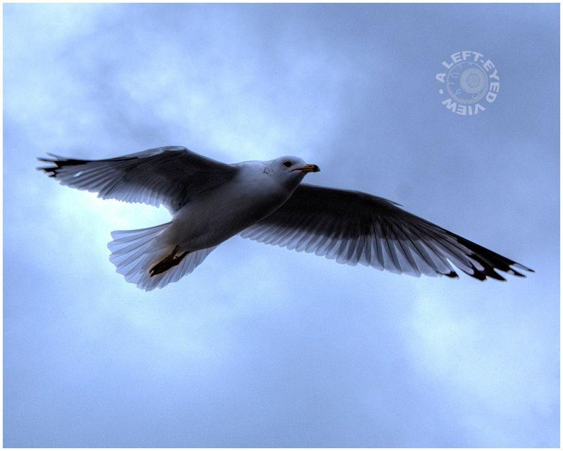 Seagull, Waukegan,