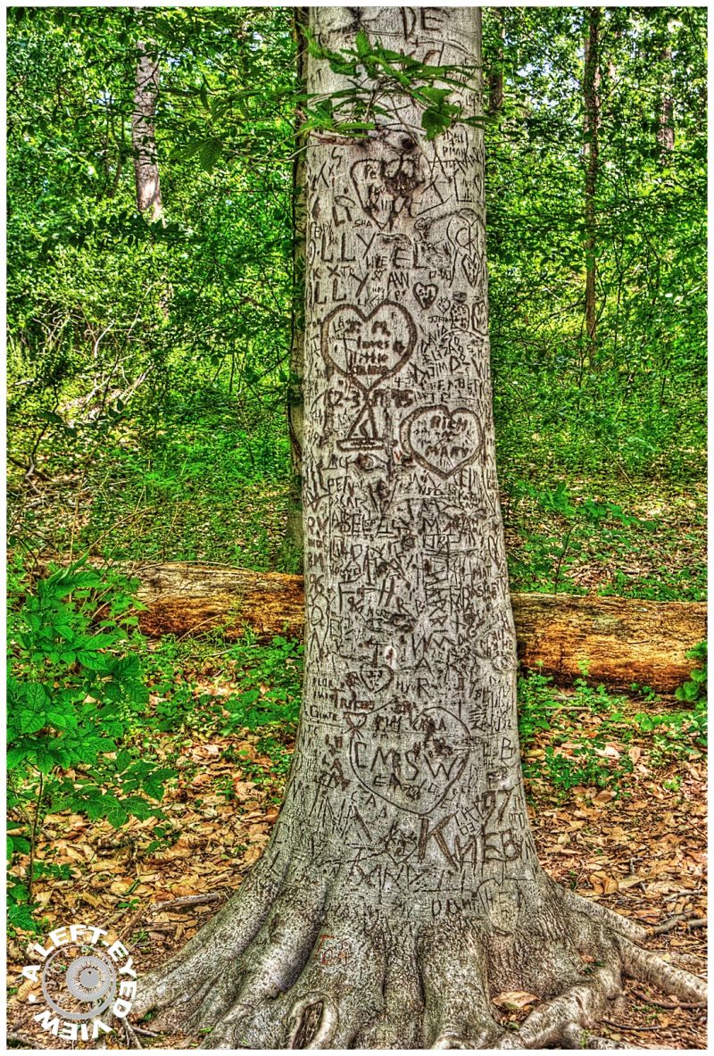"""Theodore Roosevelt Island"", ""carved tree"""